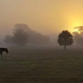 Thomas Boat Landing Sunrise by Jen Miller - Animals Horses ( nature, beautiful, horse, sunrise, morning )