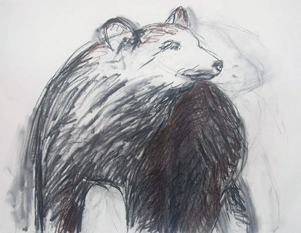 Bear #3 <br> Pastel on paper <br> 18 x 23.5 in
