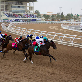There Off by Ian Cramman - Animals Horses ( taif, horse, horse racing, saudi arabia )
