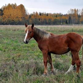 by Albina Jasinskaite - Animals Horses