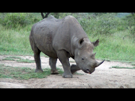 Screenshot of Video Touch - Wildlife