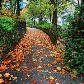 The Autumn Path by Avinash Jain - Instagram & Mobile iPhone ( eschborn, avinash jain, autumn, germany, iphone )