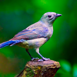 by Chandra Mouli Roy Chowdhury - Animals Birds