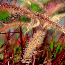 by John Hale - Nature Up Close Leaves & Grasses