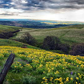 Columbia Gorge April 2014 by Lee Gochenour - Landscapes Prairies, Meadows & Fields ( oregon, columbia gorge, landscape )