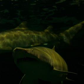 by Marlin Brando - Landscapes Underwater