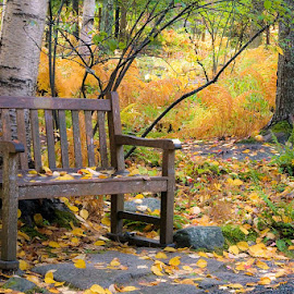 Maine bench. by Gale Perry - City,  Street & Park  City Parks