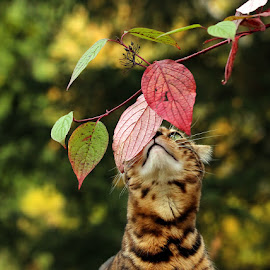 Smells like autumn :) by Jane Bjerkli - Animals - Cats Portraits