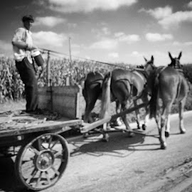 by Julie Dabour - Instagram & Mobile iPhone ( amish, lancaster, awesome, blackandwhite, amishworkers, amishboys, countryside, interesting, amazing, horses, pennsylvania )