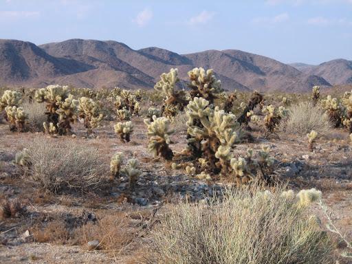 Tak to na pustyni bywa