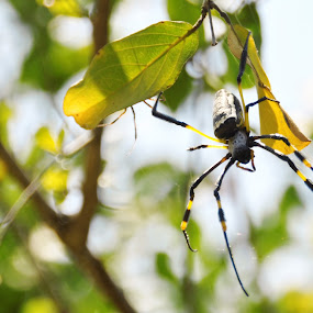 by Jenice Vd Berg - Animals Insects & Spiders