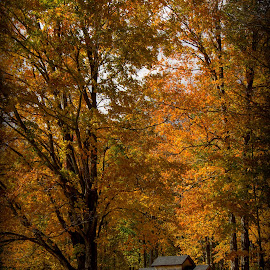 Foliage Sugar Shack by Katie Munson - Landscapes Prairies, Meadows & Fields ( foliage, fall, vermont, leaves, sugar shack )