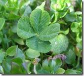 664px-Four-leaf_clover