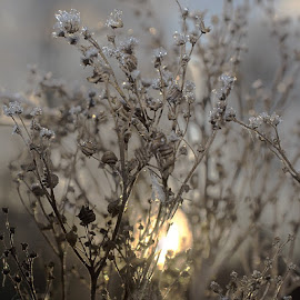The nice cold/warm feeling coming with autumn by Stine Engelsrud - Nature Up Close Leaves & Grasses ( _rsa_nature, rsa_sky, rsa_light, rsa_macro, rsa_ladies, royalsnappingartists, exklusive_shot, ig_exquisite, ig_circle, ig_shotz, shotaward, SuperHubs, animazing_nature, ahd_photo, team_of_all, topfleur, ptk_nature, phototag_nature, nature_perfection, naturehippys, nothingisordinary, instatements, instanaturefriends, insta_republic )