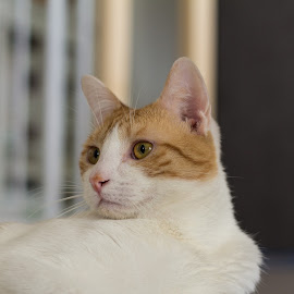 Honor me by Bjay Aysel - Animals - Cats Portraits