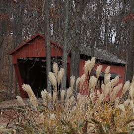 Red Covered Bridge by Susan Fries - Buildings & Architecture Bridges & Suspended Structures ( grasses, red, nature, covered bridge, fall )