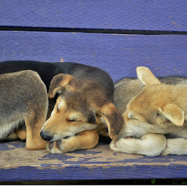 by Dave Meng - Animals - Dogs Puppies (  )