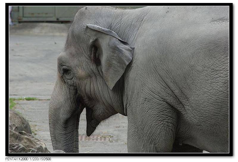 smc PENTAX-M 1:4 200mm 動物園測試照