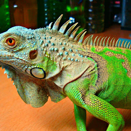 by Nicho Salim - Animals Reptiles