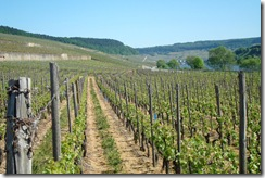 d - Moselle Valley Vinyards 11