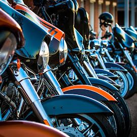 Harleys in a Line by Michael Chapman - Transportation Motorcycles ( motorcycles, harley davidsons, natchez, michael chapman, harleys )