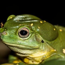 Rons by Mel Stratton - Animals Amphibians ( grubby, frog, amphibian, cute, animal,  )