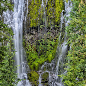 Lower Proxy Falls by Gordon Banks - Landscapes Waterscapes ( plant, oregon, north america, red, sisters wilderness, waterfall, cascades, places, usa, lower proxy falls )