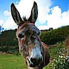 Donkey Sound Effects icon