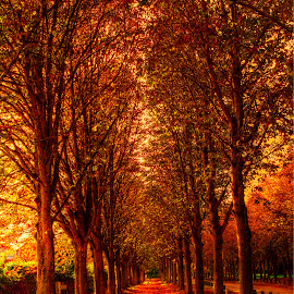 by Paulo Soares - Nature Up Close Trees & Bushes ( dramatic landscapes, , fall, color, colorful, nature, path, landscape )