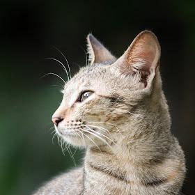 cat2464.jpg