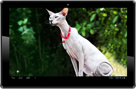 Cat Sphinx Egypte LWP - screenshot