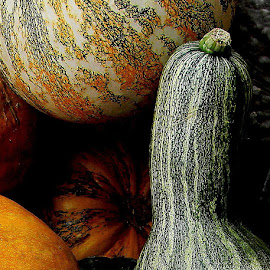 Gourdous! by Liz Hahn - Nature Up Close Gardens & Produce