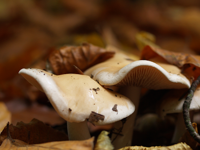 Pilze in Olerdissen