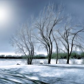 winter dance by Otto Mercik - Landscapes Weather ( winter, trees,  )