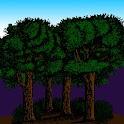 Rainforest Glossary