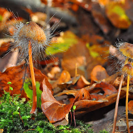 Little Family by Marco Bertamé - Nature Up Close Mushrooms & Fungi ( hairy, mycena, mold, autumn, fall, forest, leaves, mushrooms )