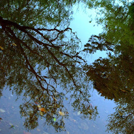 Reflections by Alexandra Tudor - Nature Up Close Water (  )