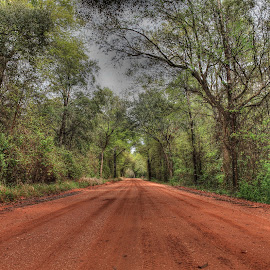 Red Dirt Road by Shelley Patterson - Landscapes Forests
