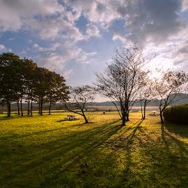 autumn morning by Kadek Lana - Landscapes Forests ( japan, autumn, tokyo, sunrise, landscape, morning, kadek wismalana )