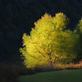 Light Over the Ridge by Robert Marquis - Nature Up Close Trees & Bushes ( colorado bend, state parks, bend, brackets )