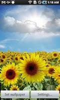 Screenshot of Sunflower LW + weather