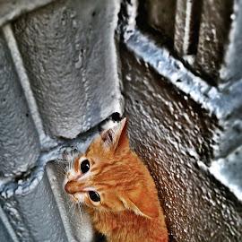Kitty by Leslie Tan - Animals - Cats Kittens ( kitten, kitty,  )
