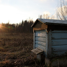 Beehive On a Sunny Winter Day by Maria Barbara - Nature Up Close Hives & Nests ( winter, beehive )