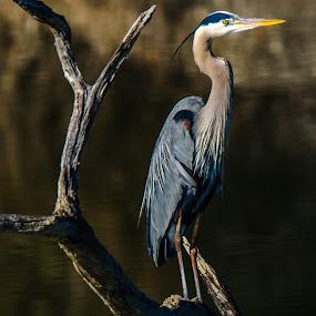 by Tony Cox - Animals Birds (  )