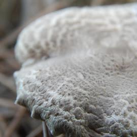 by Marijan Alaniz - Nature Up Close Mushrooms & Fungi (  )