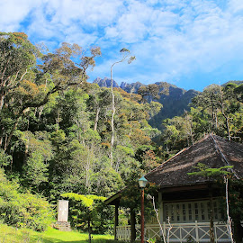 Mount Kinabalu Scenery by Alvin Ngow - Landscapes Travel ( ambience, gunung kinabalu, mountain, tropical plants, house, travel, landscape, photography, borneo, sabah, highland, sky, blue sky, kota kinabalu, asia, weather, tourist attractions, resort, activity, cool, hill, park, malaysia attractions, green, attractions, mood, forest, malaysia, relaxing, rainforest, holiday, climbing, national park, outdoor, mount kinabalu, trees, factory, view, scenery, chalet, garden, renewal, forests, nature, natural, scenic, meditation, the mood factory, emotions, jade, revive, inspirational, earthly )