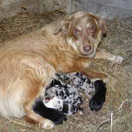 Proud momma. by Carolyn Kernan - Animals - Dogs Puppies (  )