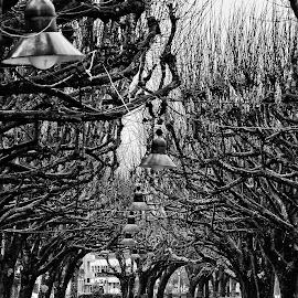 by Sandra Cid - City,  Street & Park  City Parks