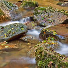 by Siniša Almaši - Nature Up Close Water ( water, up close, nature, stone, forest, rock, river )