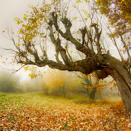 Crooked tree by Costin Mugurel - Nature Up Close Trees & Bushes ( mountains, tree, nature, autumn, romania, travel, landscape, carpathians )